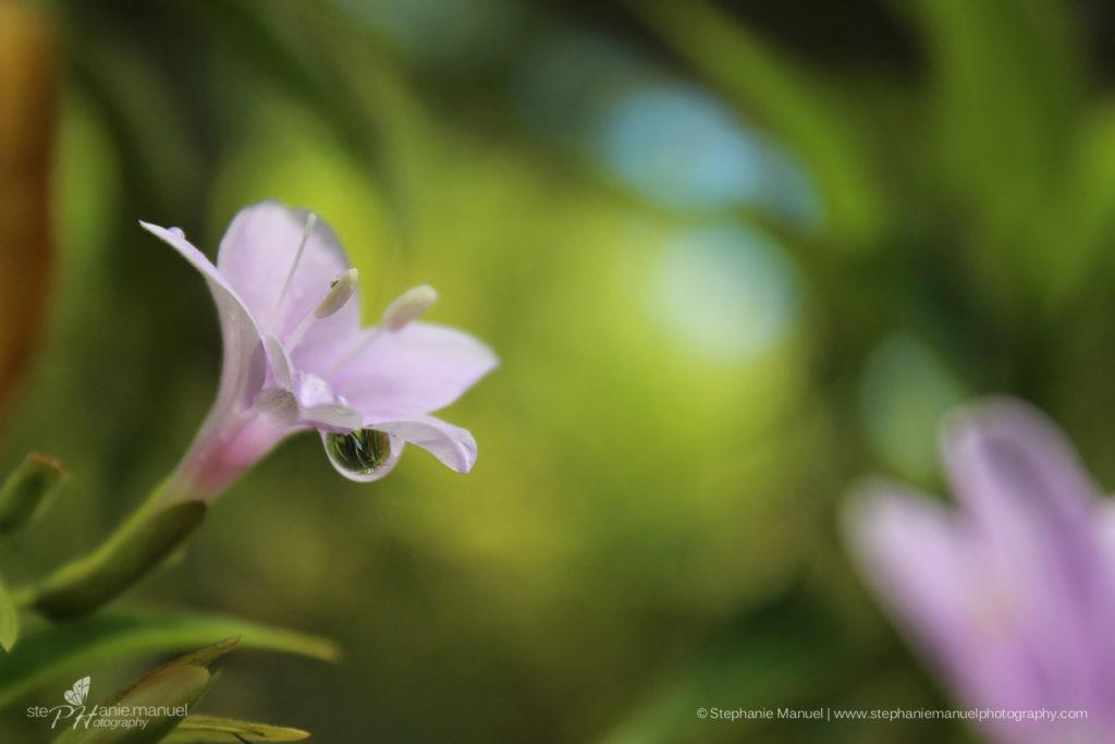 SMP-flowers-plants-10