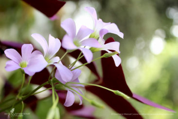 Pink petals and purple leaves combo