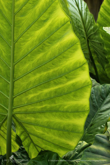 Lush green overlapping tropical leaves