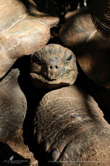 In between 2 tortoises