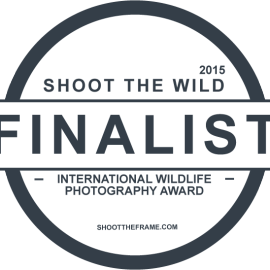 April Shoot the Wild Finalist