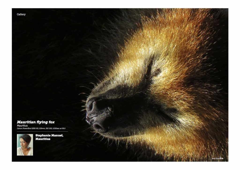 Wild Planet issue 27 Jan 2016- published flying fox