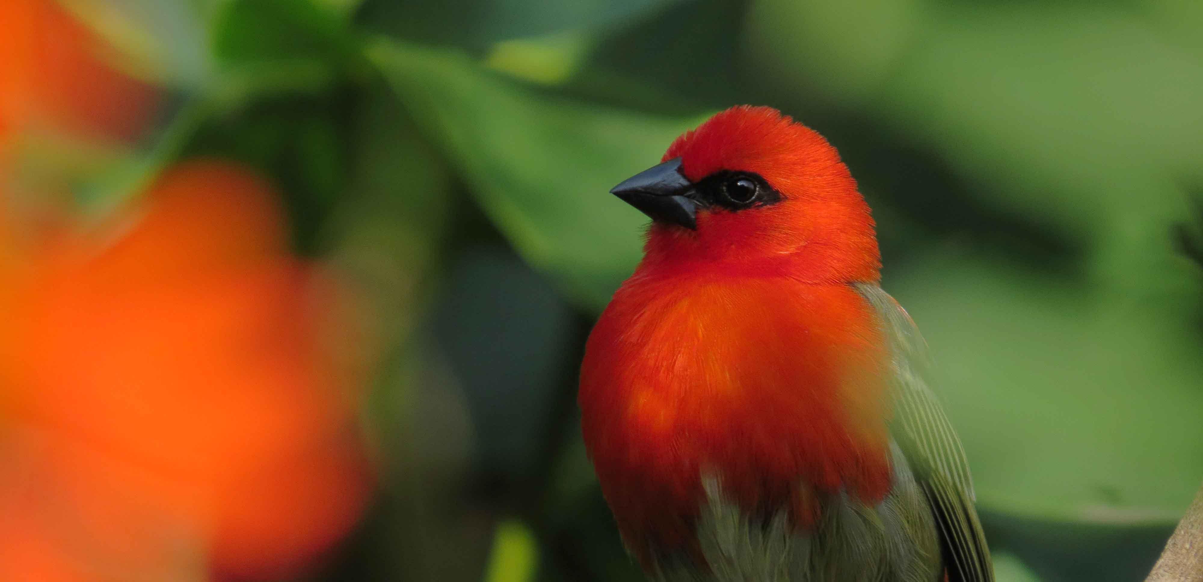 SMP-birds-home
