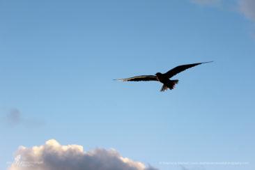 SMP-birds-3