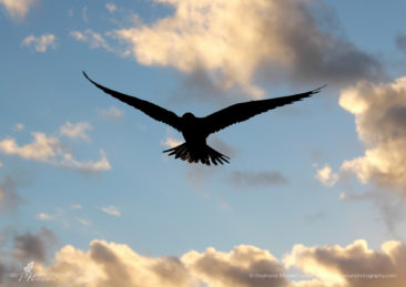 SMP-birds-4