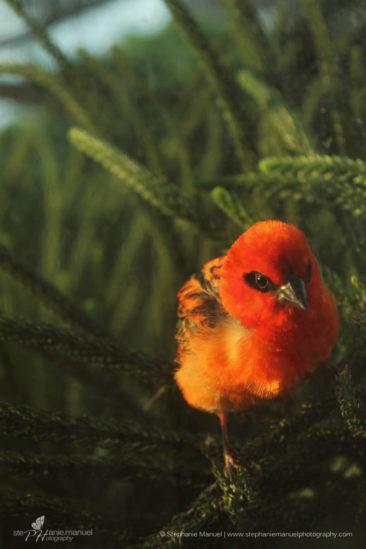 SMP-birds-portrait-3