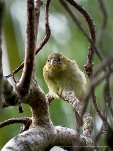 SMP-birds-portrait-7