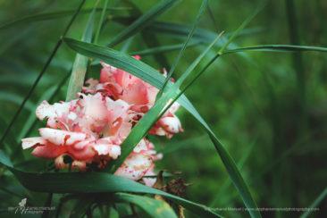 SMP-flowers-plants-2