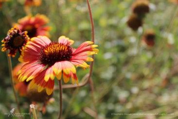 Sunlit summer petals