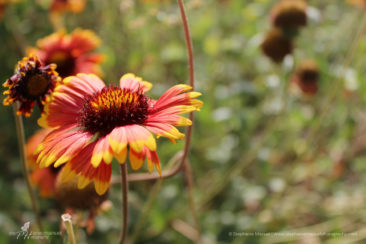 SMP-flowers-plants-5