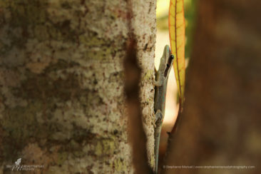 Autumn hues and the endemic gecko