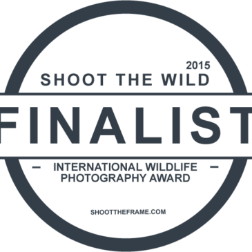 April Shoot the Wild Finalist