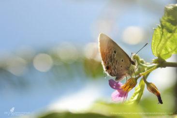 SMP-microcosm-butterflies-1