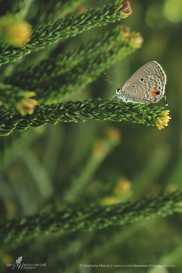 SMP-microcosm-butterflies-portrait-1