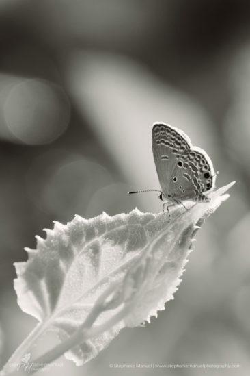 SMP-microcosm-butterflies-portrait-2