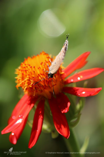 SMP-microcosm-butterflies-portrait-3