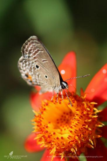 SMP-microcosm-butterflies-portrait-4