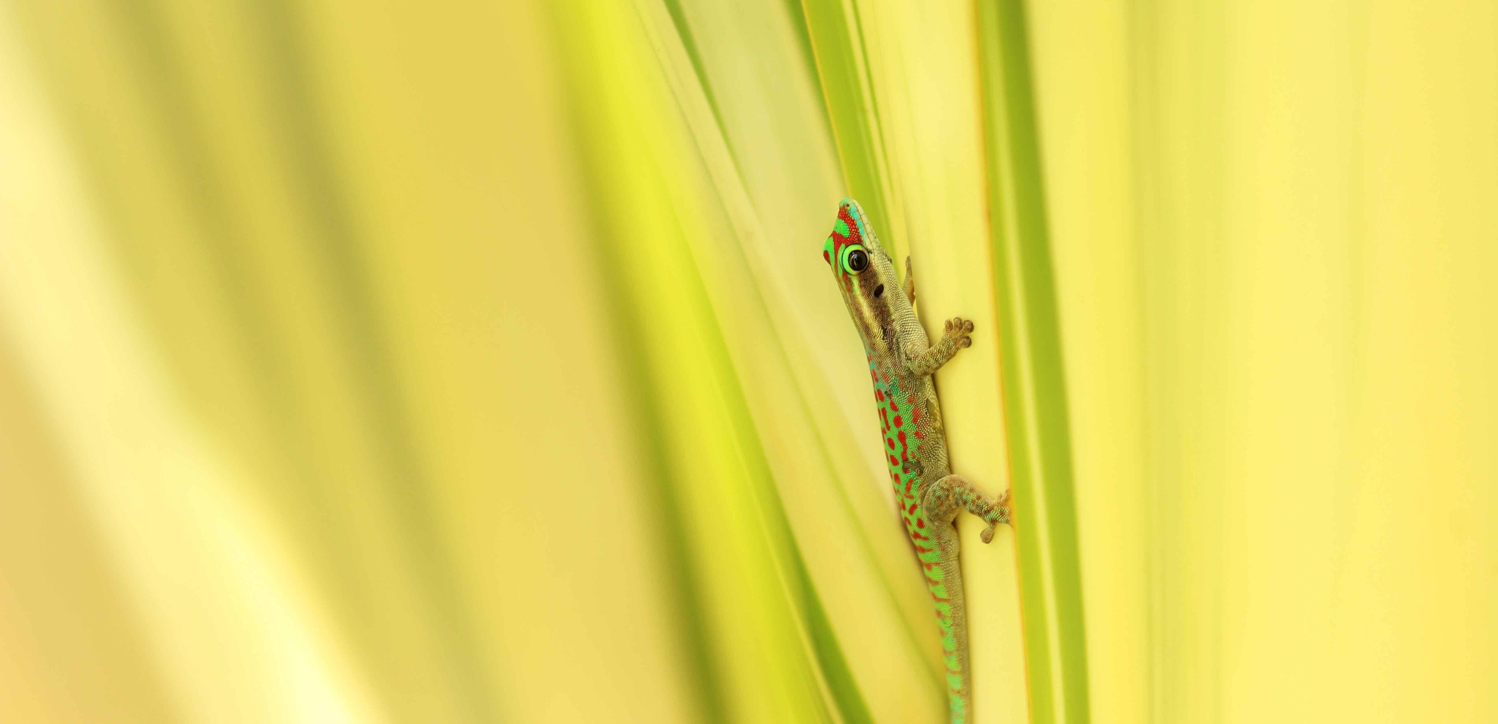 SMP-reptiles-home
